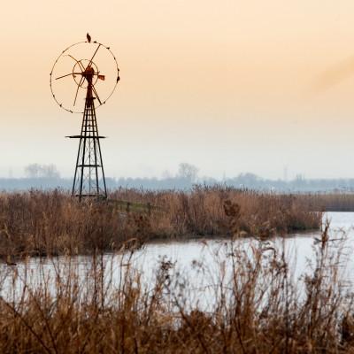 <strong>Vogel rustplaats</strong><br><p>Weidemolentje in Katwoude nabij afslag Volendam</p>