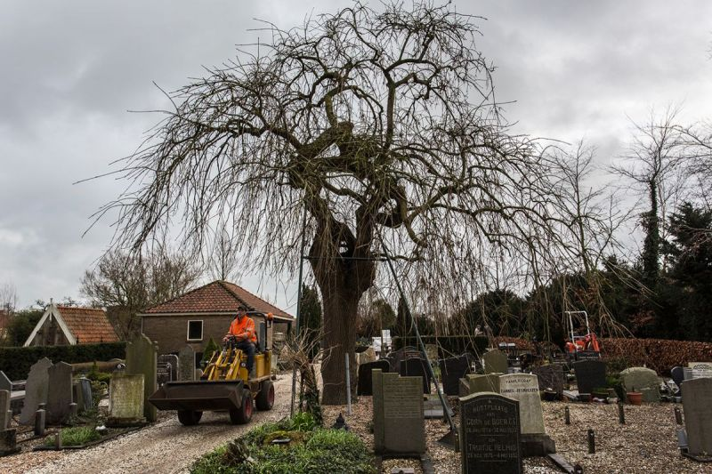 <strong>Begraafplaats Oosthuizen</strong><br><p>Een karakteristieke grillige treures is beeldbepalend voor deze begraafplaats.</p>