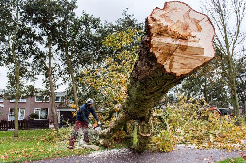 <strong>Bomenkap Noordervesting</strong><br><p>De laatste 45 van de totaal 111 kastanjes op de Noordervesting zijn gekapt omdat ze getroffen zijn<br />door de gevreesde kastanje boedziekte. De bedoeling is dat er 110 iepen voor terug komen</p>