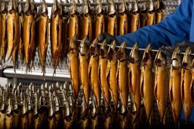<strong>Vis roken</strong><br><p>Makrelen roken bij Mooijer Volendam BV, groothandel in vis- en zeevruchten, horecaleverancier</p>